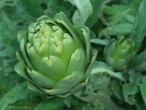 Artichoke by Flickr user magpie-moon used under a Creative Commons 2.0 Attribution license